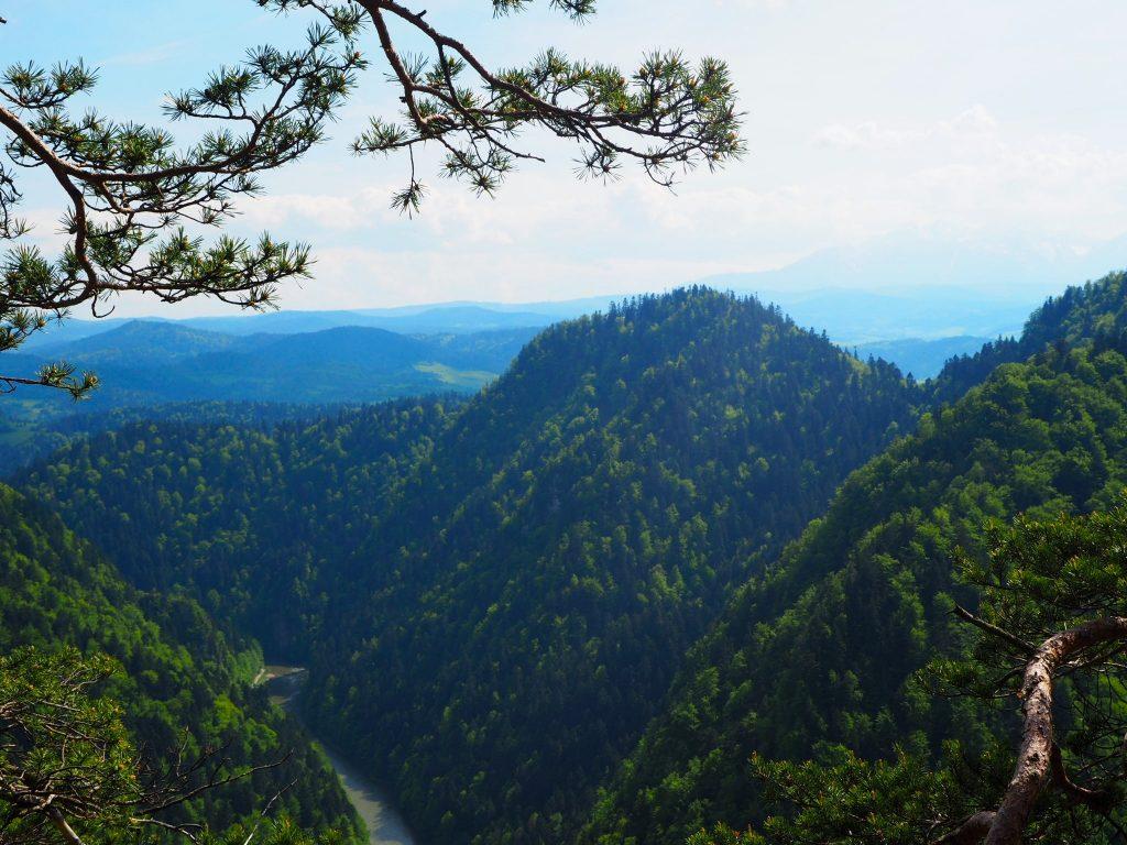 Widok ze szczytu Sokolica